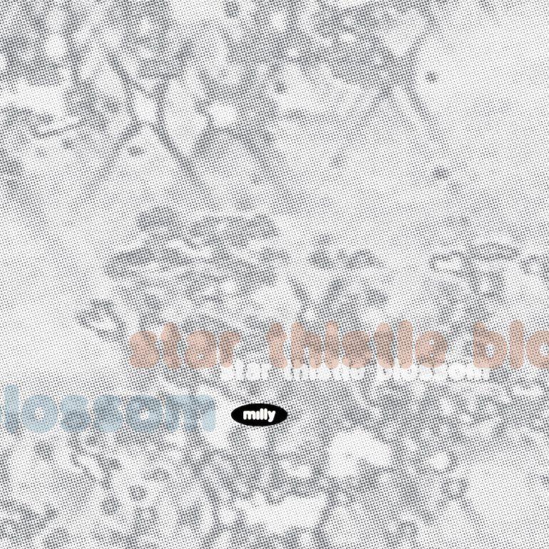 Star Thistle Blossom – Single